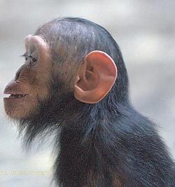 Evolutie - Man and the chimpanzee