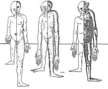 voet skelet anatomie
