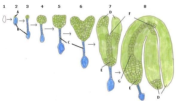 Embryology - Plant and animal